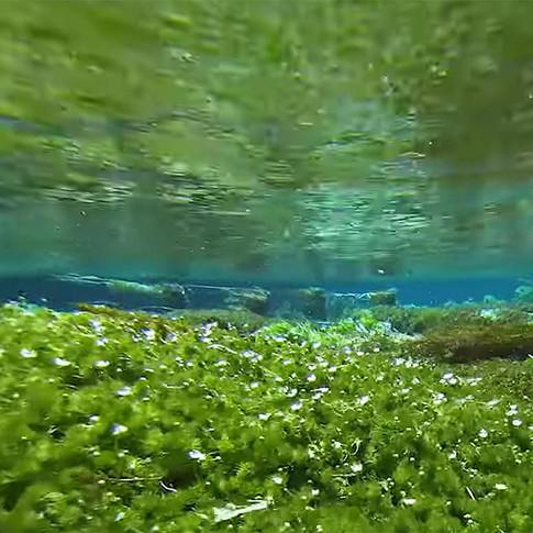 水中散歩 - 柿田川 -