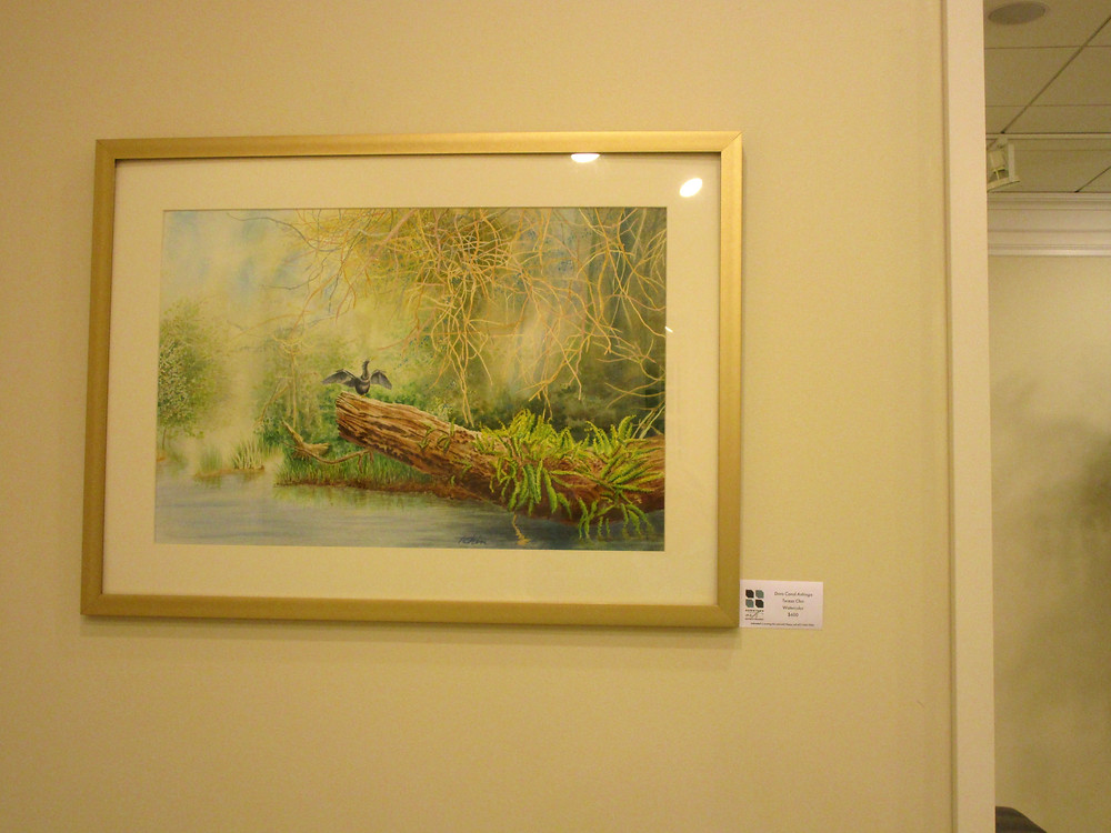 """My watercolor """"Dora Canal Anhinga"""" displayed in the exhibit of the Central Florida Watercolor Society."""