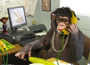 Monkey plays with Bernard Group