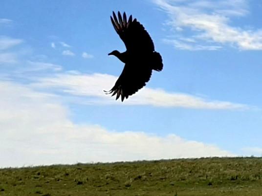 Entre Vírgulas: Voar... voar...