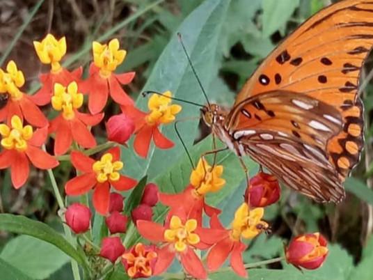 Entre Vírgulas: De lagarta à borboleta