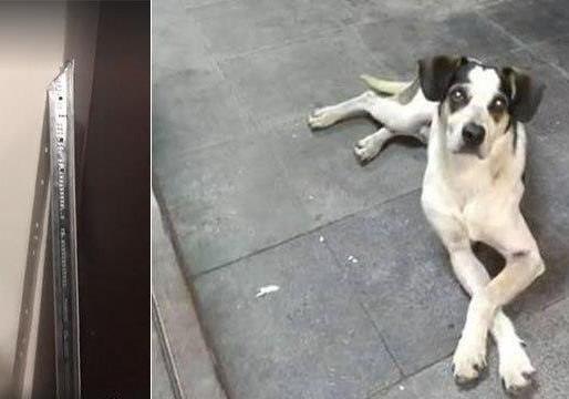 'Não tinha intenção de matar', diz autor de golpes com barra de ferro contra cão em supermercado