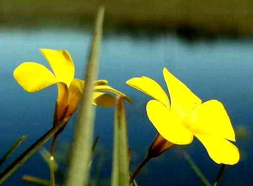 Entre Vírgulas: A primavera, o desabrochar da vida!