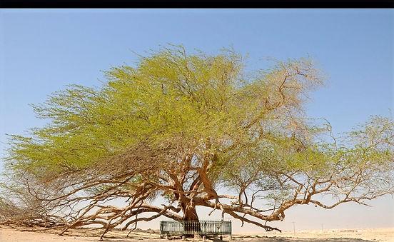 Tree%2520of%2520Life%2520Daylight_edited