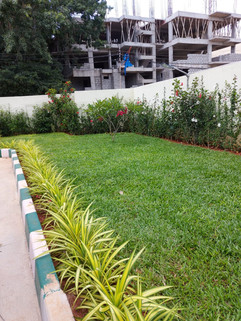 garden Maintenance bangalore (58).jpeg
