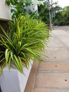 garden Maintenance bangalore (14).jpeg