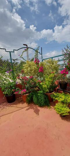 garden Maintenance bangalore (42).jpeg