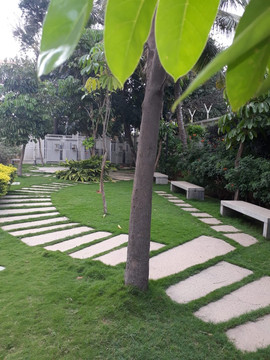garden Maintenance bangalore (33).jpeg