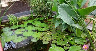 water plants water body feature.jpeg