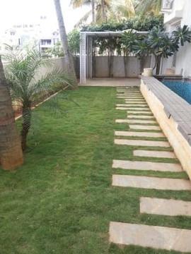 garden Maintenance bangalore (26).jpeg
