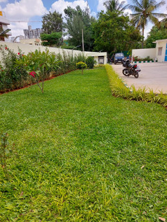 garden Maintenance bangalore (57).jpeg