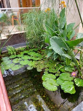 garden Maintenance bangalore (50).jpeg