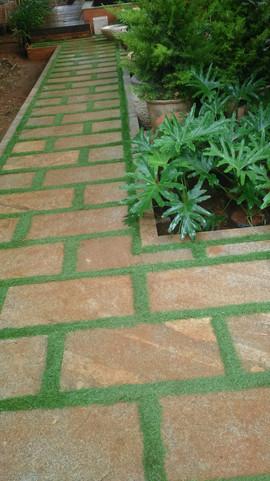 garden Maintenance bangalore (21).jpeg