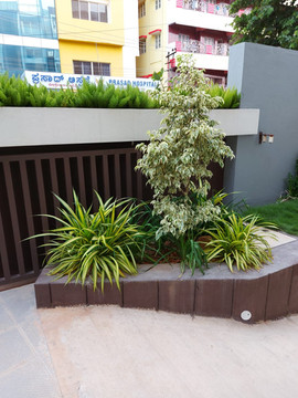 garden Maintenance bangalore (15).jpeg