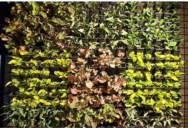 Vertical Garden Wall .jpg