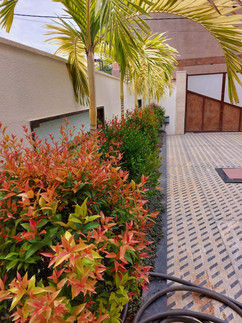 garden Maintenance bangalore (59).jpeg