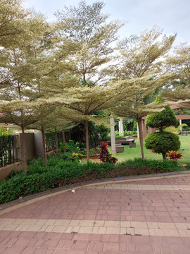 garden Maintenance bangalore (12).jpeg
