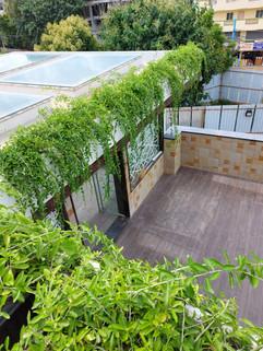 garden Maintenance bangalore (23).jpeg