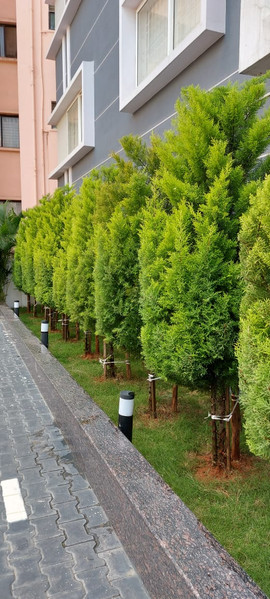 garden Maintenance bangalore (48).jpeg