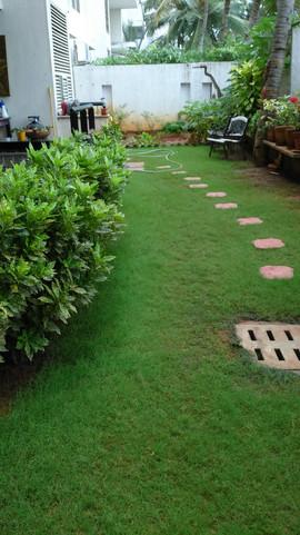 garden Maintenance bangalore (53).jpeg