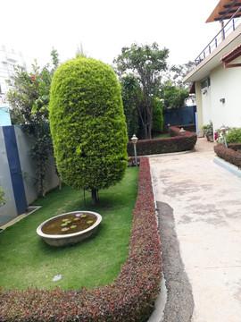 garden Maintenance bangalore (34).jpeg