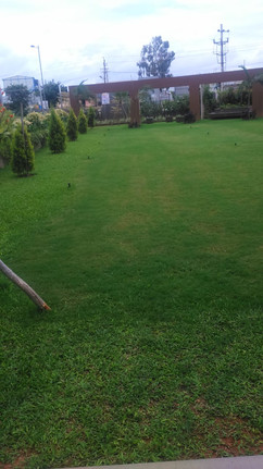 garden Maintenance bangalore (31).jpeg