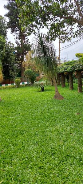 garden Maintenance bangalore (45).jpeg