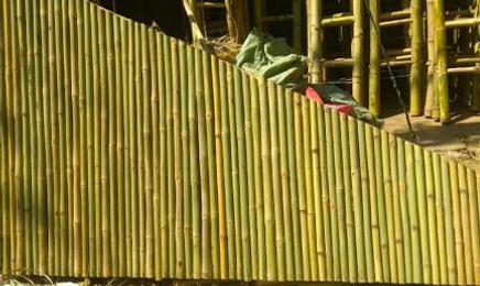 Bamboo Screens Vertical.png