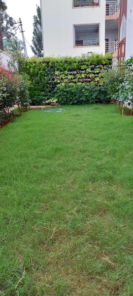 garden Maintenance bangalore (47).jpeg