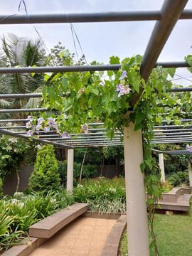 garden Maintenance bangalore (13).jpeg