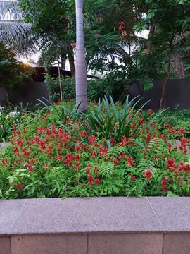garden Maintenance bangalore (51).jpeg
