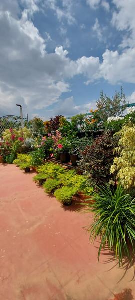 garden Maintenance bangalore (41).jpeg