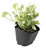 Vertical Garden Wall Hanging Pot - Black