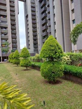 garden Maintenance bangalore (61).jpeg