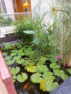 garden Maintenance bangalore (60).jpeg