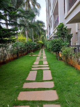 garden Maintenance bangalore (56).jpeg