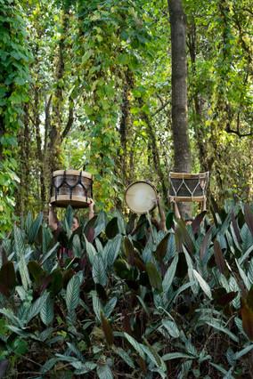 As mulheres erguem seus tambores acima de suas cabeças, parcialmente encobertas por uma série de plantas com folhagens grandes e com veios bem marcados. Atrás das mulheres, estão várias árvores altas e algumas plantas trepadeiras.