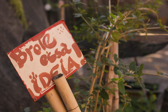 Entre duas hastes de bambu, está preso um papel branco com a seguinte frase escrita em tinta vermelha: brote essa ideia! Ao lado, está uma planta com galhos finos e folhas pequenas e alongadas.