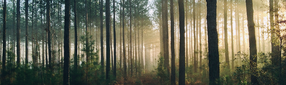 Image of misty sunlight shining through forest trees