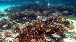 Coral-Island-Tioman-Snorkeling-2-575x320
