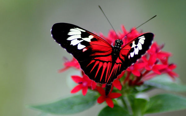 butterfly-color-bright-wings-wallpaper.j