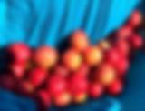 Quandong Fruit_edited.jpg