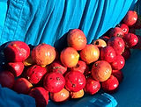 Quandong Fruit_edited.jpg