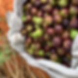 Pindan Walnut Mayi Harvests Native Foods