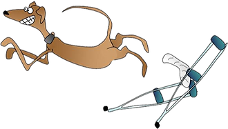 Animal Orthopaedics.png