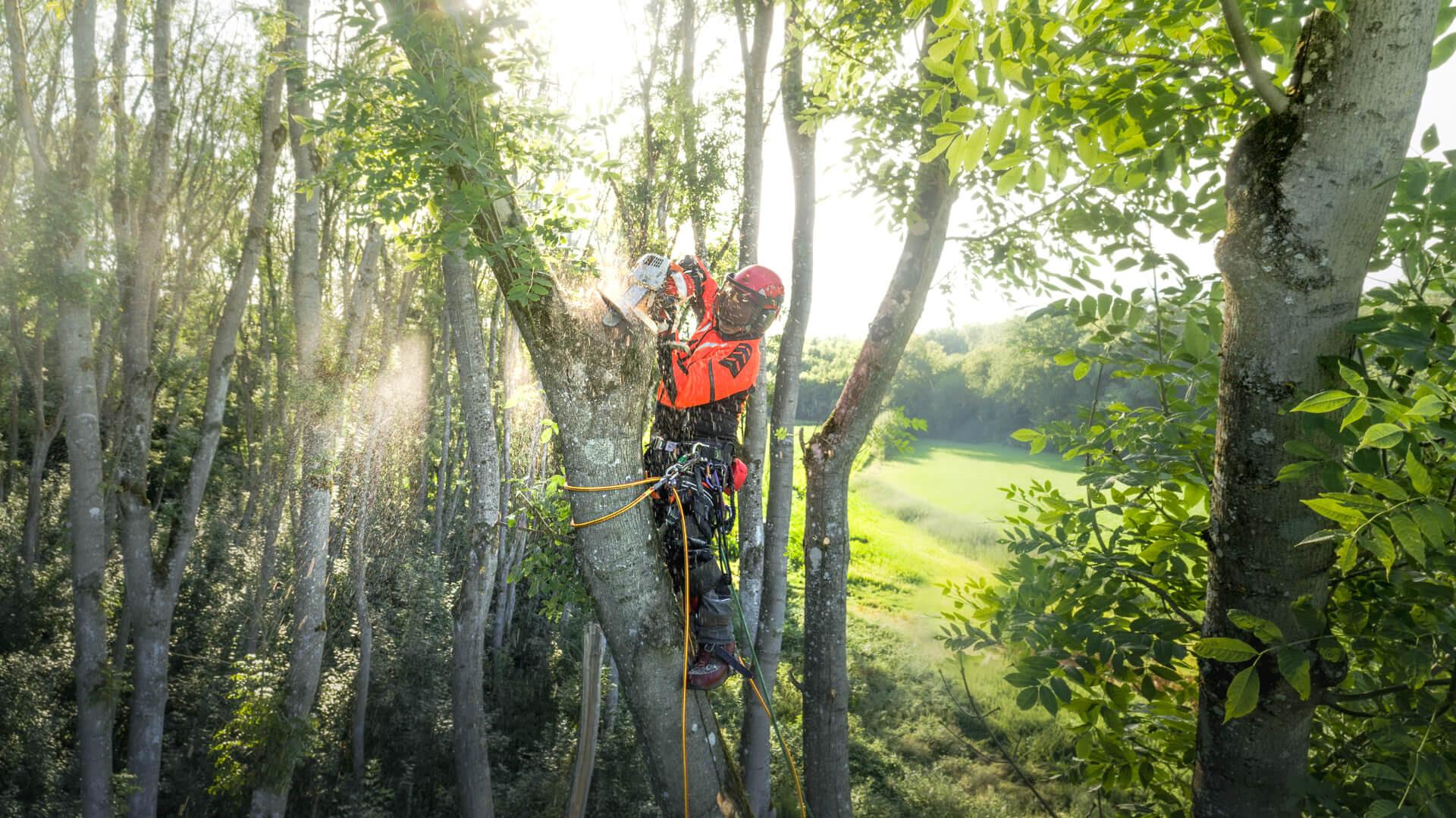 Grob Baumservice Baumpflege