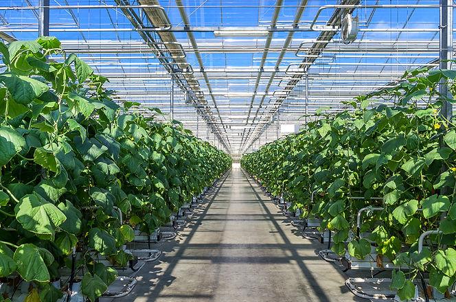 OGVG_greenhouse1 (1).jpeg