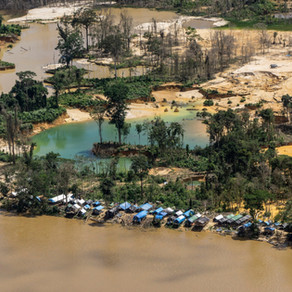 The contaminated forest-mining in the Amazon