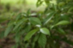 plantationsmall.jpg