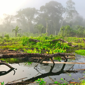 Is it possible to think of nature as a person? Lessons from the Amazon
